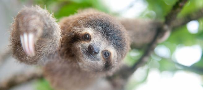 International-Sloth-Day-2018